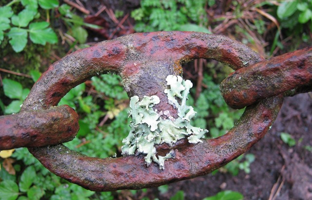 Lichen and rust cr Judy Darley
