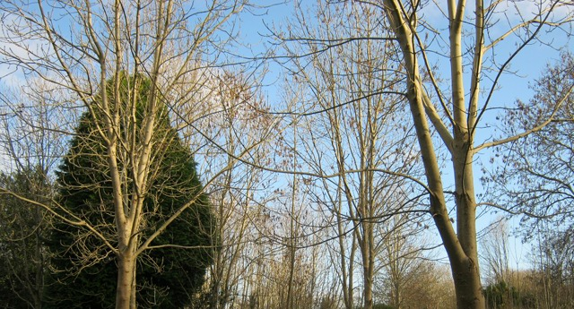 Arnos Vale trees cr Judy Darley