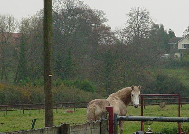 Curious horse cr Judy Darley