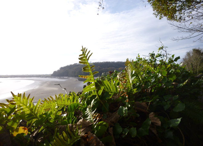 Milk Wood, Laugharne cr Judy Darley