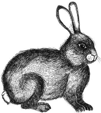 Rabbit Hunt cr Louise Boulter