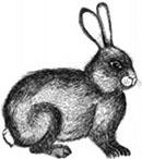 Rabbit-Hunt-cr-Louise-Boultersml