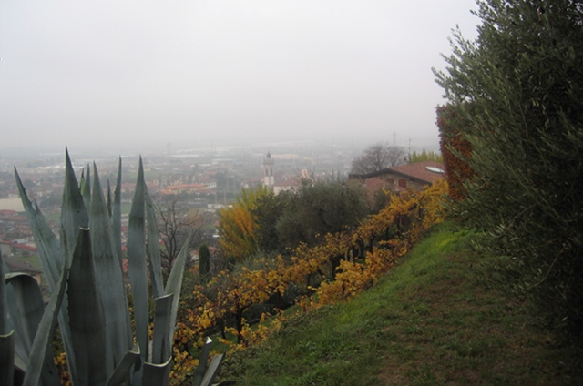 Azienda Agricola Tenuta degli Angeli vineyard views cr Judy Darley