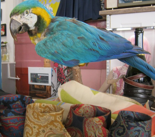 The Birdcage parrot cr Judy Darley