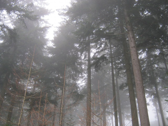Trees and fog cr Judy Darley