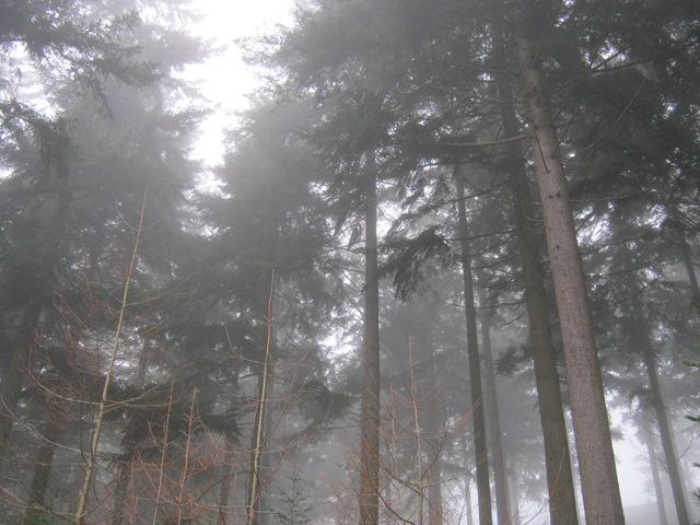 Trees and fog cr Judy Darley