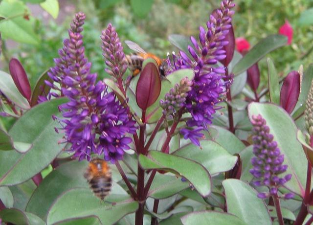 Bees cr Judy Darley