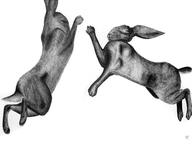 Boxing Hares cr Rachel Falber