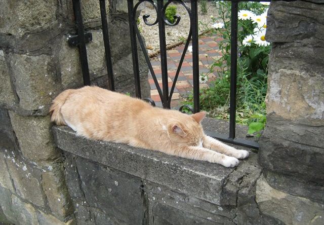 Cat on wall cr Judy Darley
