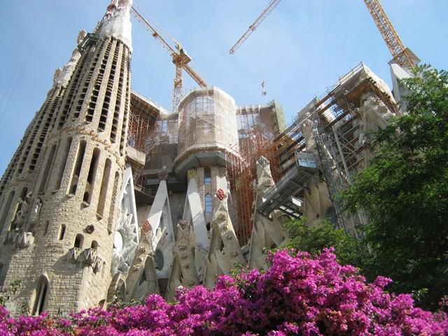 Sagrada Familia bougainvillea cr Judy Darley