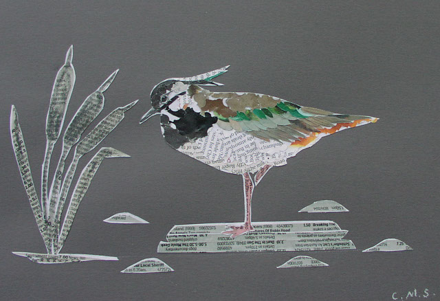 Lapwing cr Carolyn Stubbs