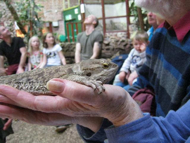 Pol meets lizard cr Judy Darley