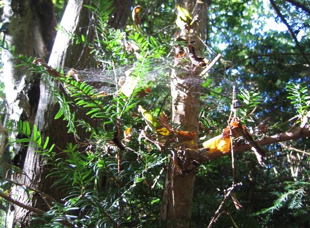 Spider web cr Judy Darley