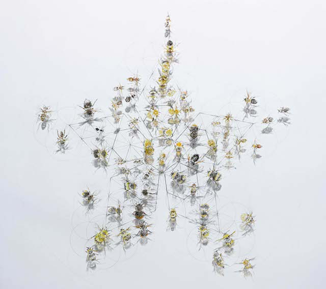 All Fly - 60 species of bee © Jessica Albarn