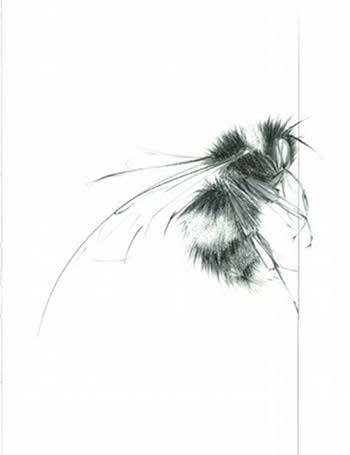 BEE 2 © Jessica Albarn