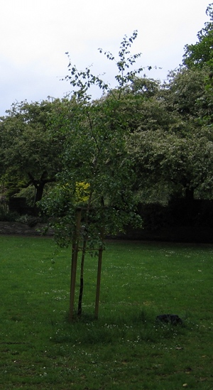 Quaker Buriel Ground cr Judy Darley