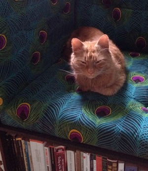 Foxy enjoying the Library chair cr Alexander Love