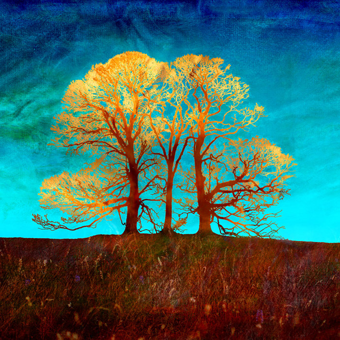 Rusty Trees cr Samatha Gilraine
