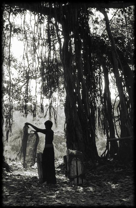 Banyan Tree, Orissa, India cr Premgit