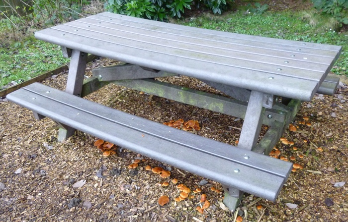 Picnic bench mushrooms cr Judy Darley