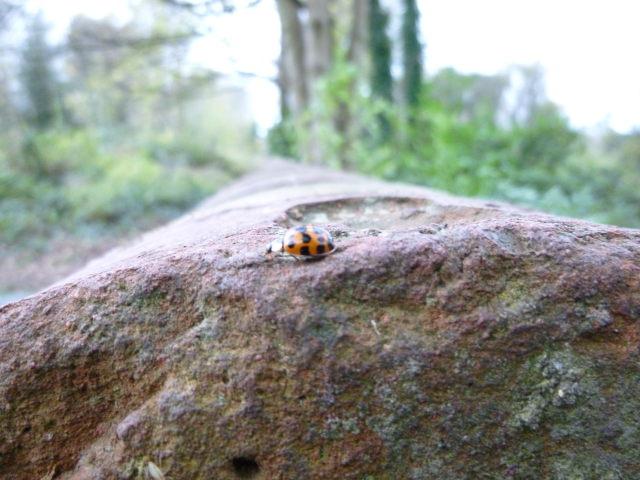 Ladybird cr Judy Darley