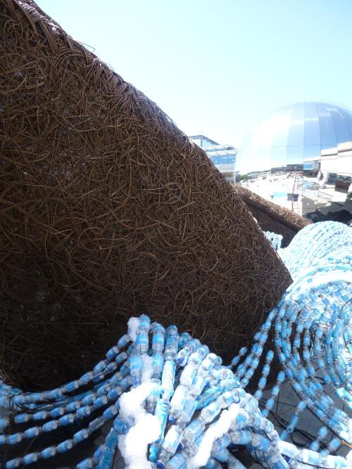 Bristol Whales4 cr Judy Darley