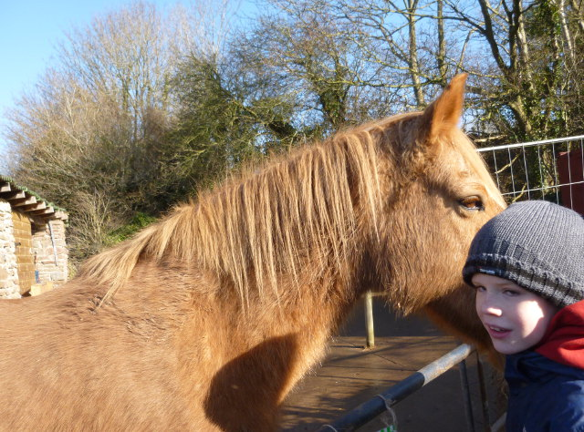 HorseWhisperer cr Judy Darley