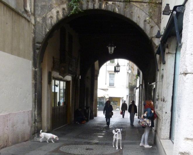 Brescia dogs cr Judy Darley