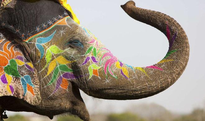 Jaipur Literary Elephant