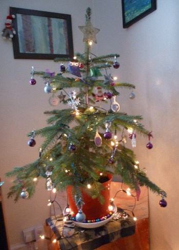 Our little Christmas tree 2015 by Judy Darley