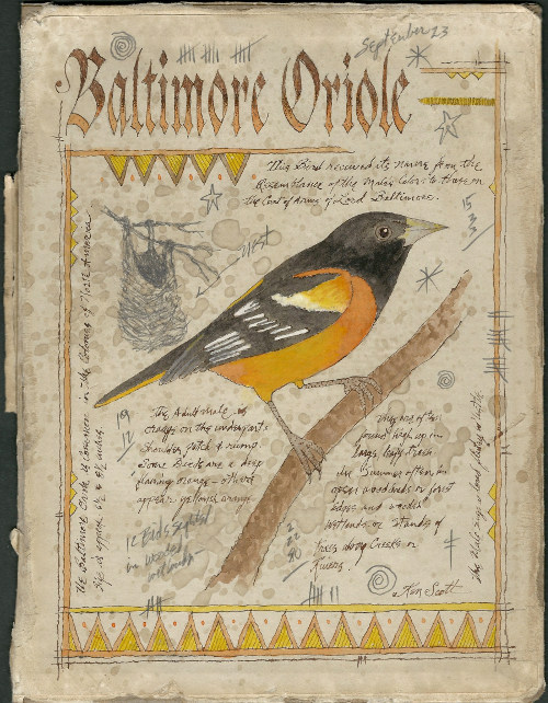 Baltimore Oriole by Ken Scott