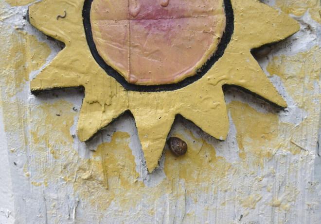 Sunshine snail cr Judy Darley