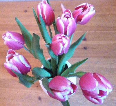 Tulips cr Judy Darley