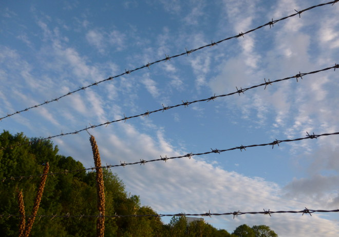 Barbed sky cr Judy Darley