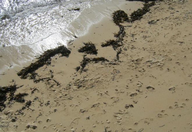 Cornish shore cr Judy Darley