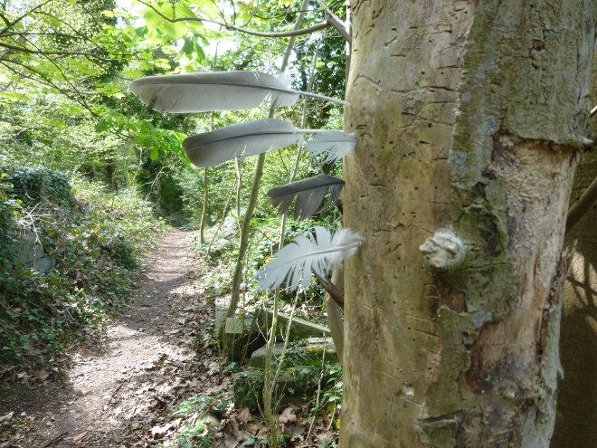 Feather tree cr Judy Darley