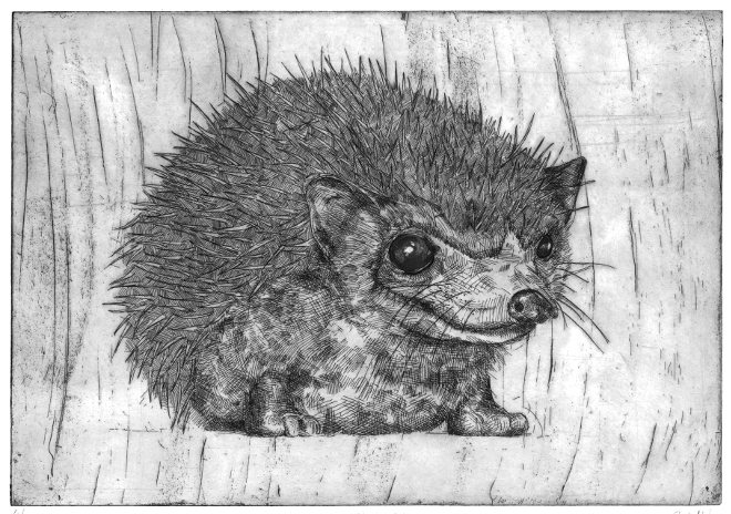 Hedgehog print by Rosie McLay