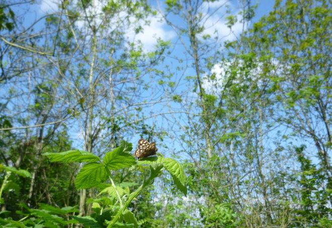 Butterfly cr Judy Darley