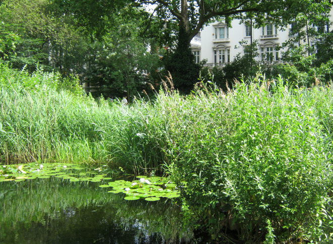 Lily pond, Natural History Museum garden by Judy Darley