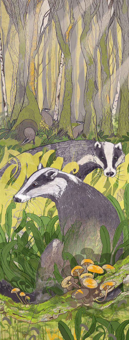 Badgers by Shelly Perkins