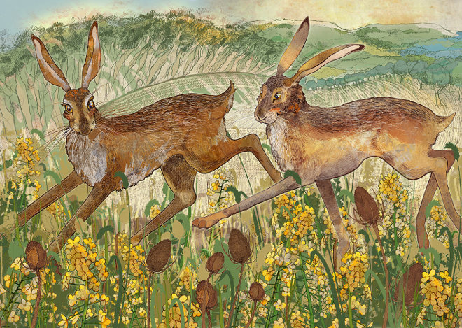 Clent Hares by Shelly Perkins