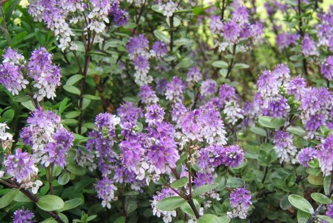Bristol Botanic Garden cr Judy Darley