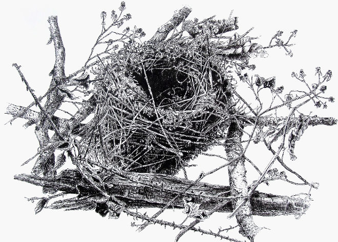 Nest in the Brambles by Liane Tancock