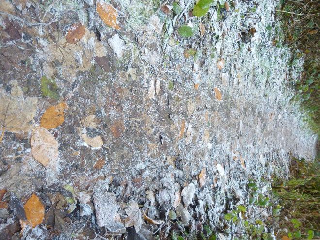 Arnos Vale leafy path by Judy Darley