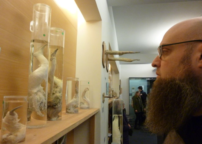 The Icelandic Phallological Museum photo by Judy Darley