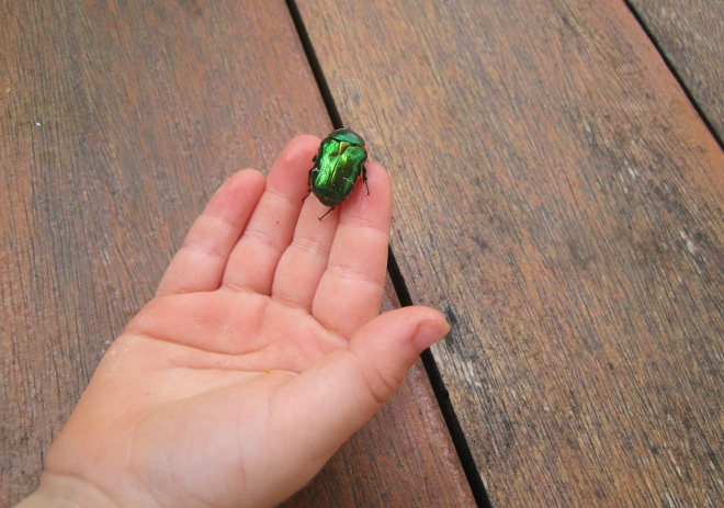 Child holds beetle cr Judy Darley