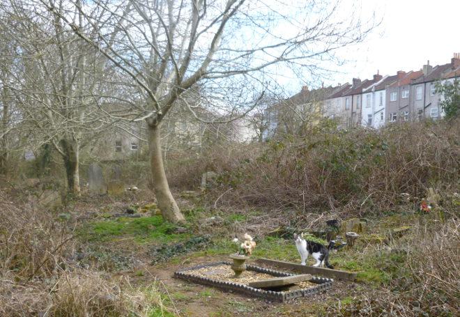 Arnos Vale Cemetery cat cr Judy Darley