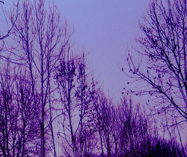 Dusk-winter-trees-cr-Judy-Darley