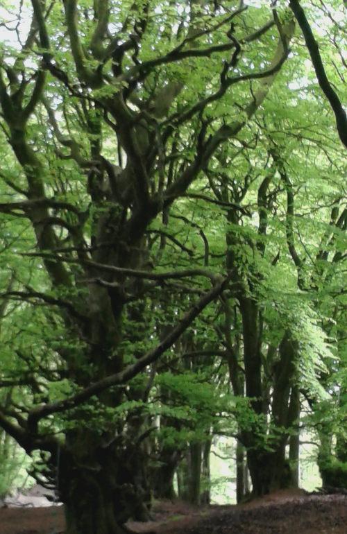 Forest cr Virginia Bergin