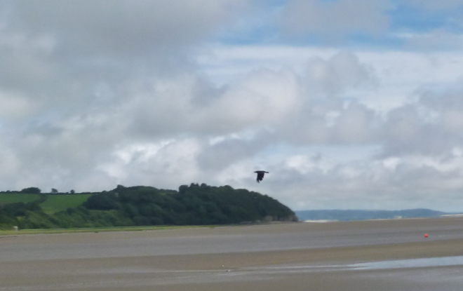 Flying in Laugharne crop by Judy Darley